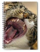 Hear Me Roar Spiral Notebook