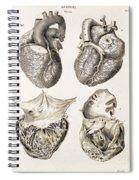 Heart, Anatomical Illustration, 1814 Spiral Notebook