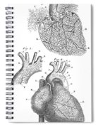 Heart Anatomy, Illustration, 1703 Spiral Notebook