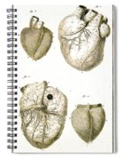 Heart And Muscle Fibers, 18th Century Spiral Notebook