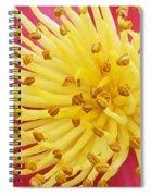 Heart Of Indian Hawthorn Spiral Notebook