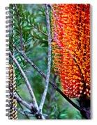 Heath Banksia From Fairfax Walk Spiral Notebook