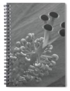 Heavenly Hibiscus Bw 11 Spiral Notebook
