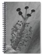 Heavenly Hibiscus Bw 13 Spiral Notebook