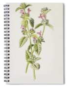 Hedge Calamint  Spiral Notebook