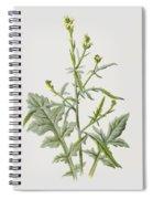 Hedge Mustard Spiral Notebook