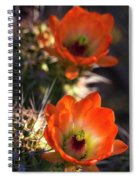 Hedgehog Flowers In Dawn's Early Light  Spiral Notebook
