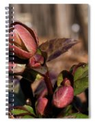 Heliborus Early Flower Buds 2 Spiral Notebook