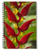 Heliconia Dielsiana Spiral Notebook