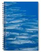 Hellers Barracuda Spiral Notebook