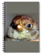 Hello Chick Spiral Notebook