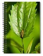 Hemiptroid Sucking Bug Spiral Notebook
