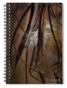 Hemp Dogbane Seeds Spiral Notebook