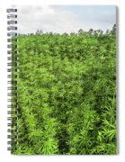 Hemp Plantation Spiral Notebook