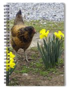 Hen And Daffodils Spiral Notebook