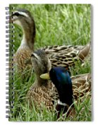 Hen Hen Drake At Frankenmuth On The Cass River Spiral Notebook