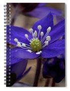 Hepatica 4  Spiral Notebook