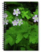 Herb Robert On The Ma At Spiral Notebook