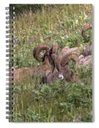 Herd Of Bighorn Sheep Spiral Notebook
