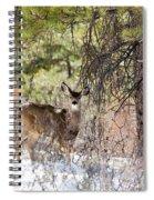 Herd Of Mule Deer In Deep Snow Spiral Notebook
