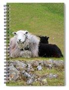 Herdwick Sheep On A Hillside In Cumbria Spiral Notebook