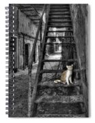 Here Kitty Kitty Kitty... Spiral Notebook