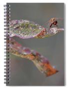 Here's Lookin' At You- Dragonfly Spiral Notebook