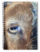 Here's Looking At You Kid - The Truth About Goats' Eyes Spiral Notebook