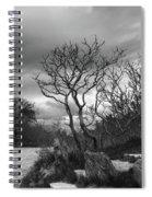 Hermit Island Tree 0912 Spiral Notebook