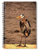 Egret Bad Feather Day Spiral Notebook