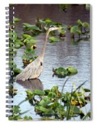Heron Fishing In The Everglades Spiral Notebook