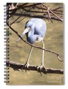 Heron On Branch Spiral Notebook