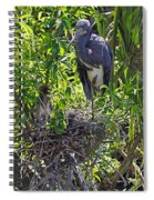 Heron With Chick In Nest Spiral Notebook