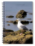 Herring Gull At Charmouth Spiral Notebook