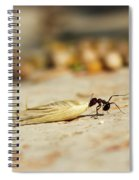 Hey Ant Dragging An Oat Seed Spiral Notebook