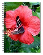 Hibiscus And Butterfly Diners Spiral Notebook