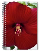 Hibiscus By Picket Fence Spiral Notebook