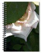 Hidden Rose Spiral Notebook