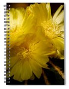 High Angle View Of Cactus Flowers Spiral Notebook