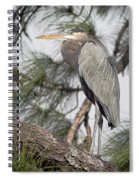 High In The Pine Spiral Notebook