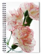 High Key Pink And White Carnation Floral  Spiral Notebook