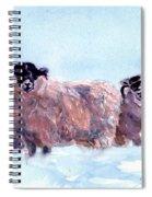 Highland Sheep Spiral Notebook