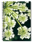 Himalayan Hogweed Cowparsnip Spiral Notebook