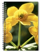 Himalayan Marsh Marigold Spiral Notebook