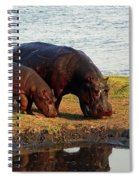 Hippo Mother And Child - Botswana Africa Spiral Notebook