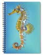 Hippocampus  Spiral Notebook