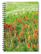History Of The Paintbrush Spiral Notebook