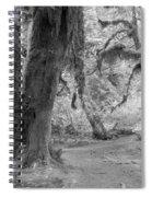 Hoh Rain Forest 3378 Spiral Notebook