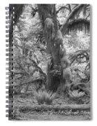 Hoh Rain Forest 3381 Spiral Notebook