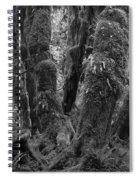 Hoh Rain Forest 3406 Spiral Notebook
